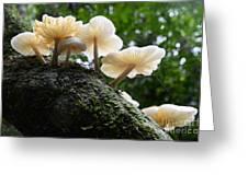 Beauty Of Mushrooms Argentina Greeting Card