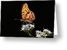 Beauty Of Nature Butterfly Brazil 2 Greeting Card