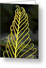 Beauty Of Nature Fern 3 Greeting Card