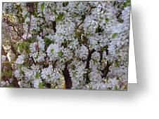 Beauty Of Spring Greeting Card by Yvette Pichette