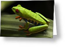 Beauty Of Tree Frogs Costa Rica 2 Greeting Card