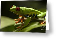 Beauty Of Tree Frogs Costa Rica 3 Greeting Card