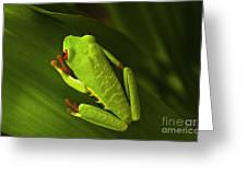 Beauty Of Tree Frogs Costa Rica 6 Greeting Card