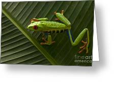 Beauty Of Tree Frogs Costa Rica 8 Greeting Card