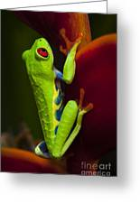 Beauty Of Tree Frogs Costa Rica 9 Greeting Card