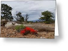 Beauty On 25 Mesa Panoramic Greeting Card