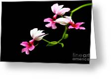 Beauty On Black Greeting Card