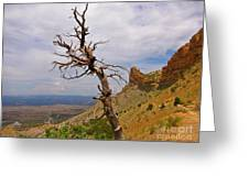 Beauty On High Greeting Card