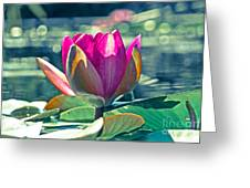 Beauty On The Water Greeting Card