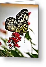 Beauty Wing Greeting Card