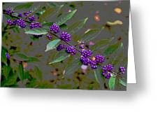 Beautyberry Greeting Card