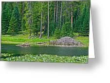 Beaver Dam In Heron Pond In Grand Teton National Park-wyoming Greeting Card