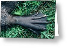 Beaver Foot Greeting Card