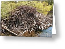 Beaver Lodge Greeting Card