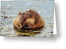 Beaver Portrait On Canvas Greeting Card