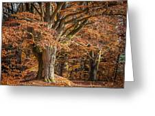 Bech Tree With Red Foliage Greeting Card