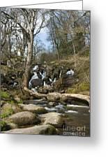 Becky Falls Dartmoor Greeting Card by Donald Davis