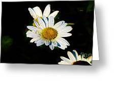 Bed Of Daisy's For Daisy Greeting Card
