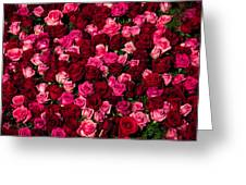 Bed Of Red Roses Greeting Card
