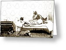 Bed Time For Kitty Cats Histrica Photo Circa 1900 Greeting Card