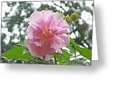 Bedazzled By The Light Louisiana Confederate Rose Greeting Card