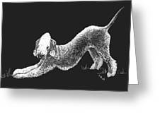 Bedlington Terrier Greeting Card