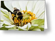 Bee All That You Can Bee Greeting Card