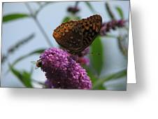 Bee And Butterfly Greeting Card