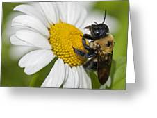 Bee And Daisy Greeting Card