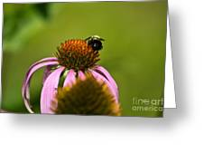 Bee And Echinacea Flower Greeting Card
