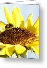 Bee And Flower Greeting Card by Les Cunliffe