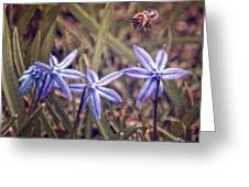 Bee And Squill Greeting Card