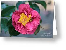 Bee And Wasp On Camellia Greeting Card