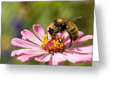 Bee At Work Greeting Card