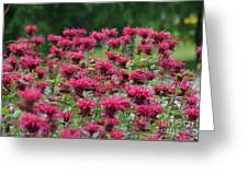 Bee Balm Bounty Greeting Card