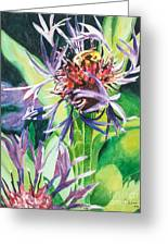 Bee Balm Greeting Card