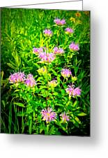 Bee Balm Of The Butterfly Gardens Of Wisconsin Greeting Card