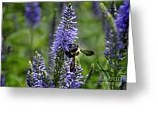 Bee Blue Greeting Card