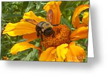 Bee Bold 2 Of 3 Greeting Card