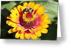 Bee Bright Greeting Card