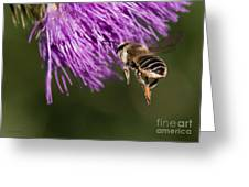 Bee Butt Greeting Card