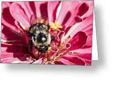 Bee Close Up On Pinkish Red Flower Greeting Card