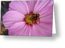 Bee Cosmos Greeting Card