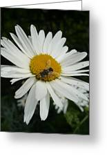 Bee Daisy Greeting Card