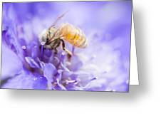 Bee Dream Greeting Card
