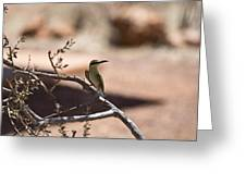 Bee-eater V15 Greeting Card
