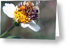 Bee- Extracting Nectar Greeting Card