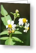 Bee-flower Pollen Greeting Card