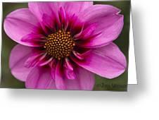 Bee Happy Dahlia Greeting Card