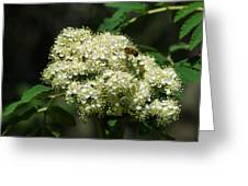 Bee Hovering Over Rowan Truss - Featured 3 Greeting Card